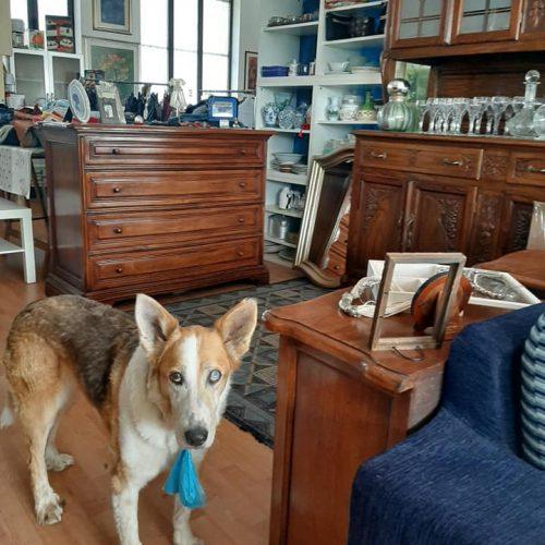 charity shop massazza legami di cuore